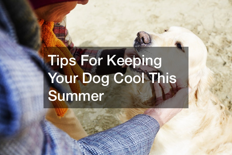 how to keep my dog cool in the heat